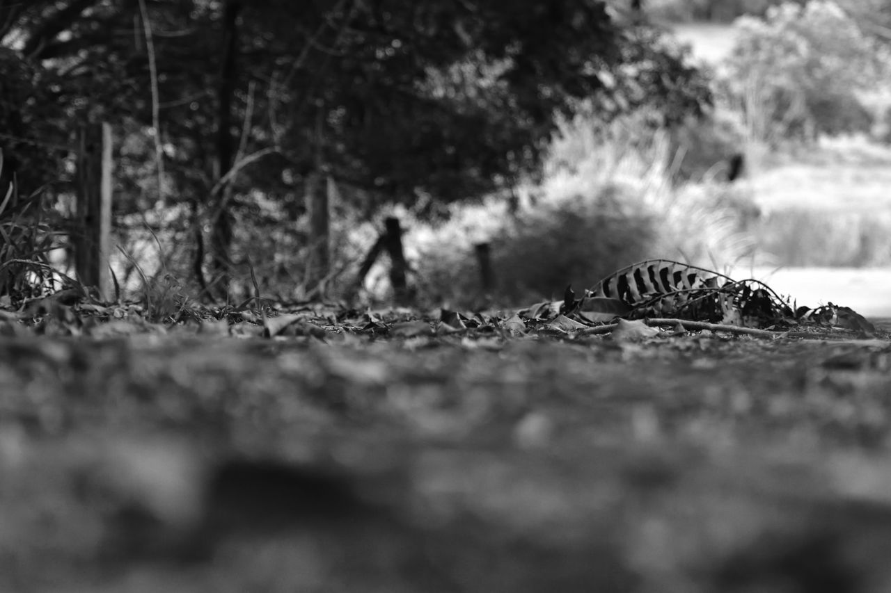 one animal, animal themes, animals in the wild, reptile, selective focus, animal wildlife, nature, day, outdoors, no people, close-up, tree, mammal