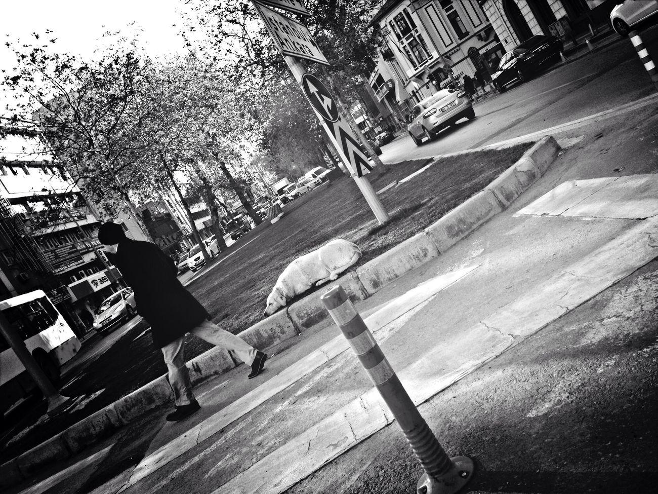 Fortheloveofblackandwhite Streetphotography