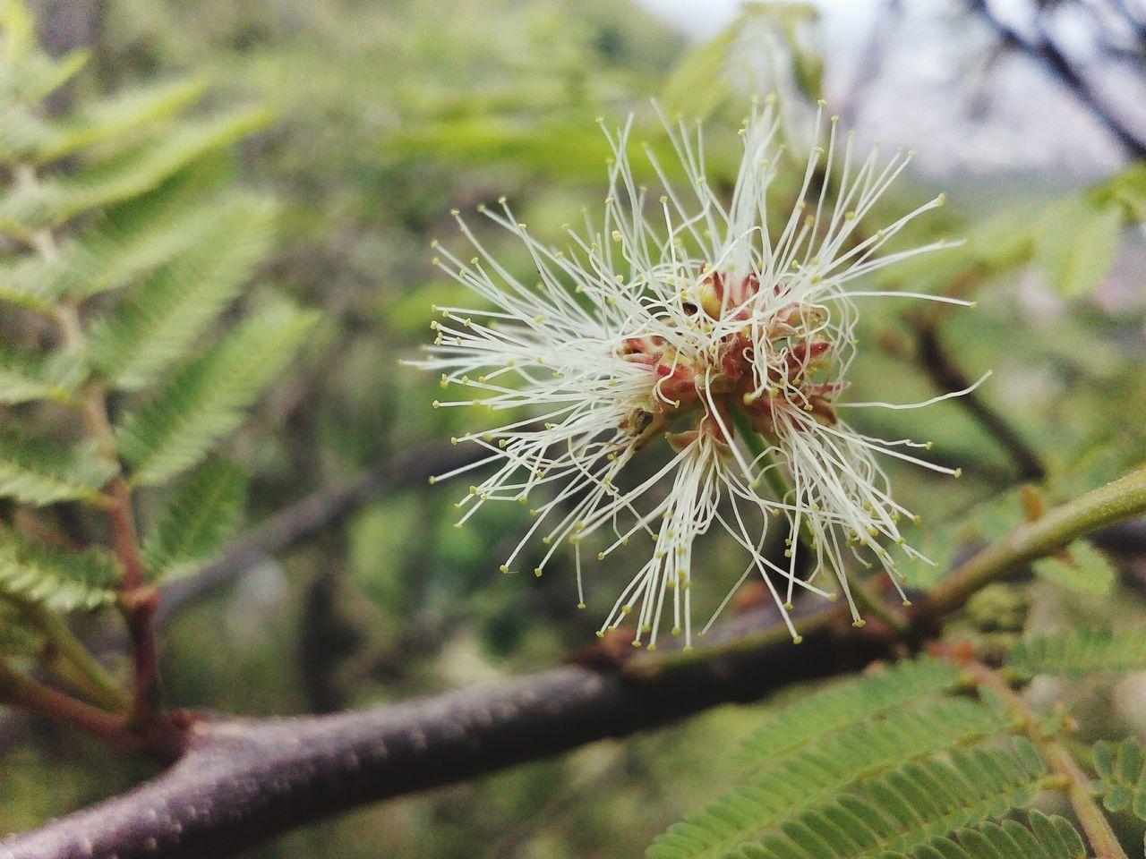 Plants Nature Naturaleza En los Ates
