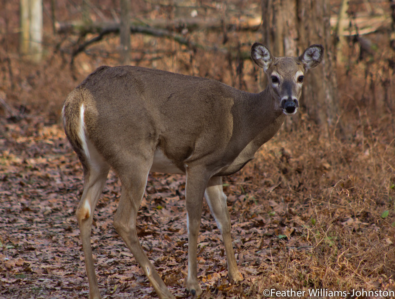 Showcase: February Deer Nature Outdoors Hiking Wildlife Fwjphotos Check This Out Earth Worship