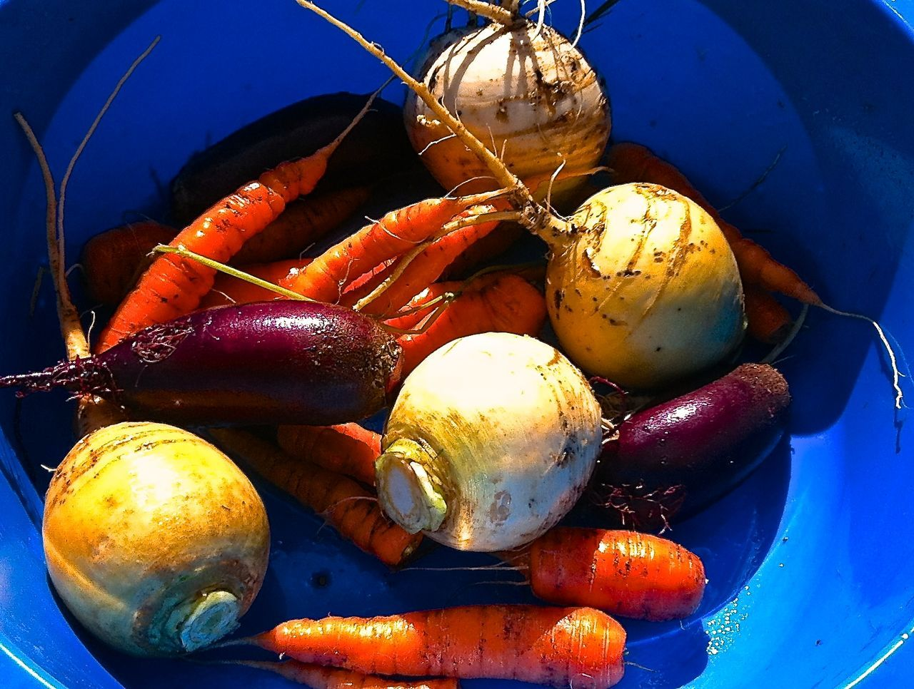 Beets Carrots Close-up Day Food Food And Drink Freshness Harvesting Healthy Eating Home Gardening No People Organic Food Organic Lifestyle Organic Living Raw Food Summer Vegetables