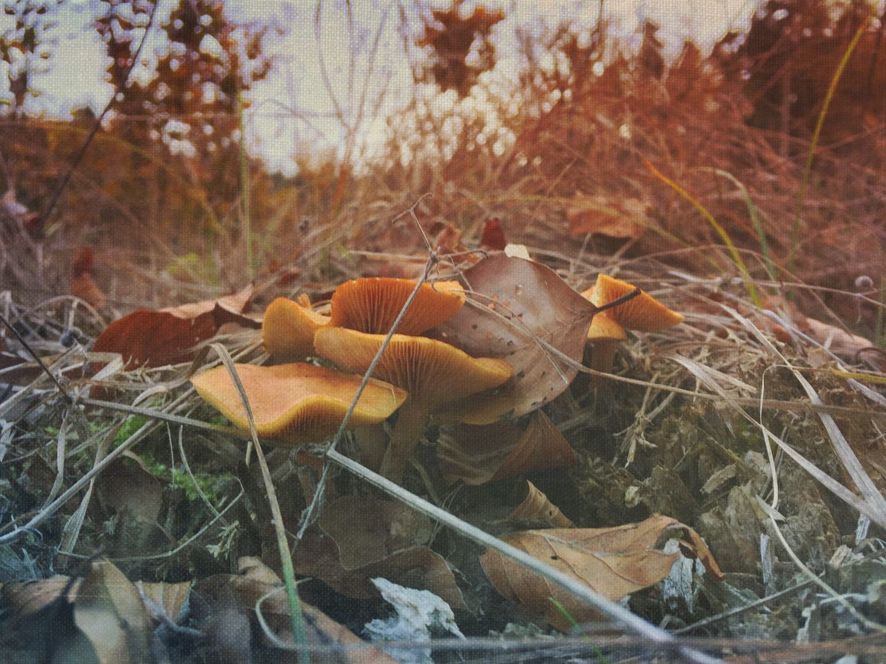 Mushroom time EyeEm Nature Lover EyeEmSwiss Mushrooms Forest Naturelovers Nature_collection Streamzoofamily Mextures Mexturesapp