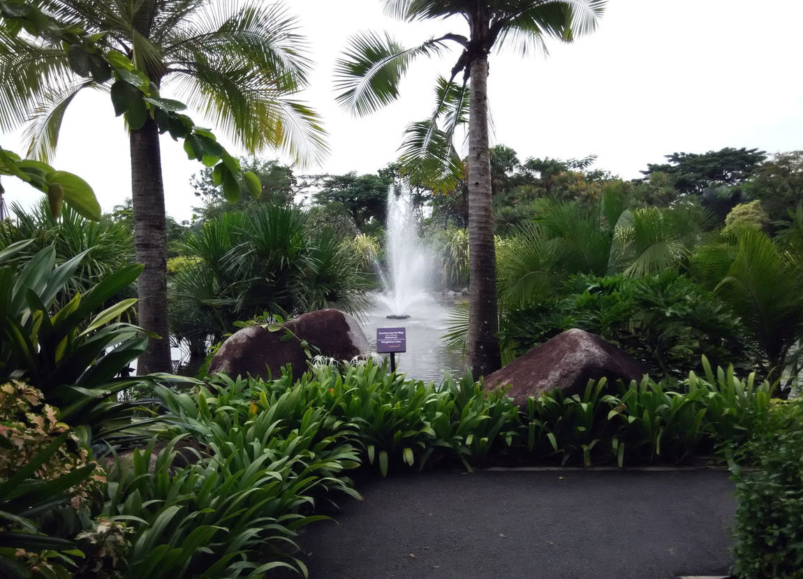 Botanic Garden In Singapore Beauty In Nature Formal Garden Garden Jumping Water Palm Tree Park Park - Man Made Space Plant Water