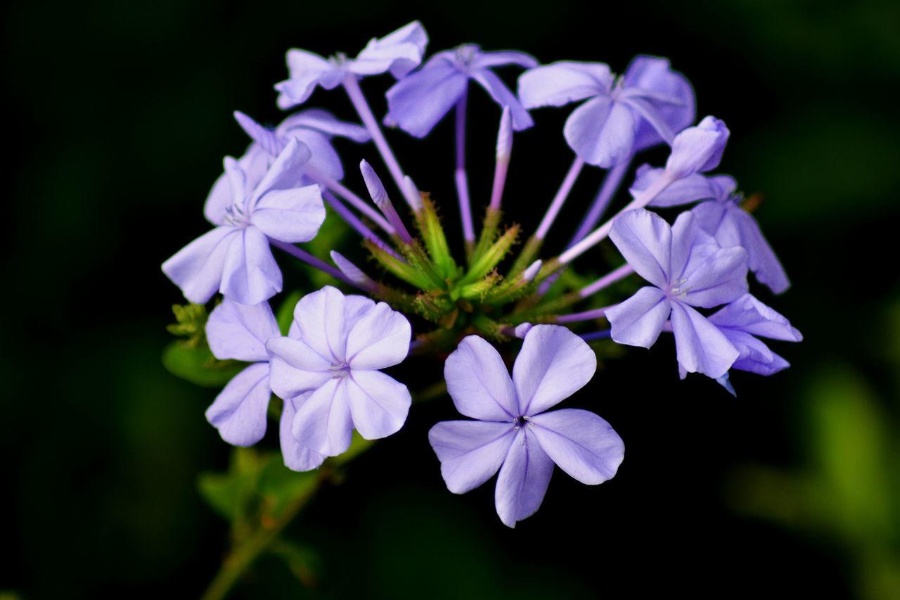 Cadiz Close-up Cádiz, Spain Flower Flowers, Nature And Beauty Flowers,Plants & Garden Foreground Focus Nature Purple Purple Flower