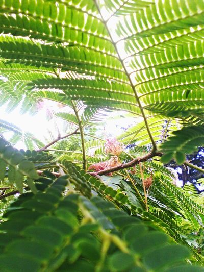 Summer ☀ Nature Love Sun Green Flower Beautiful Pink Flow  Pi Plants
