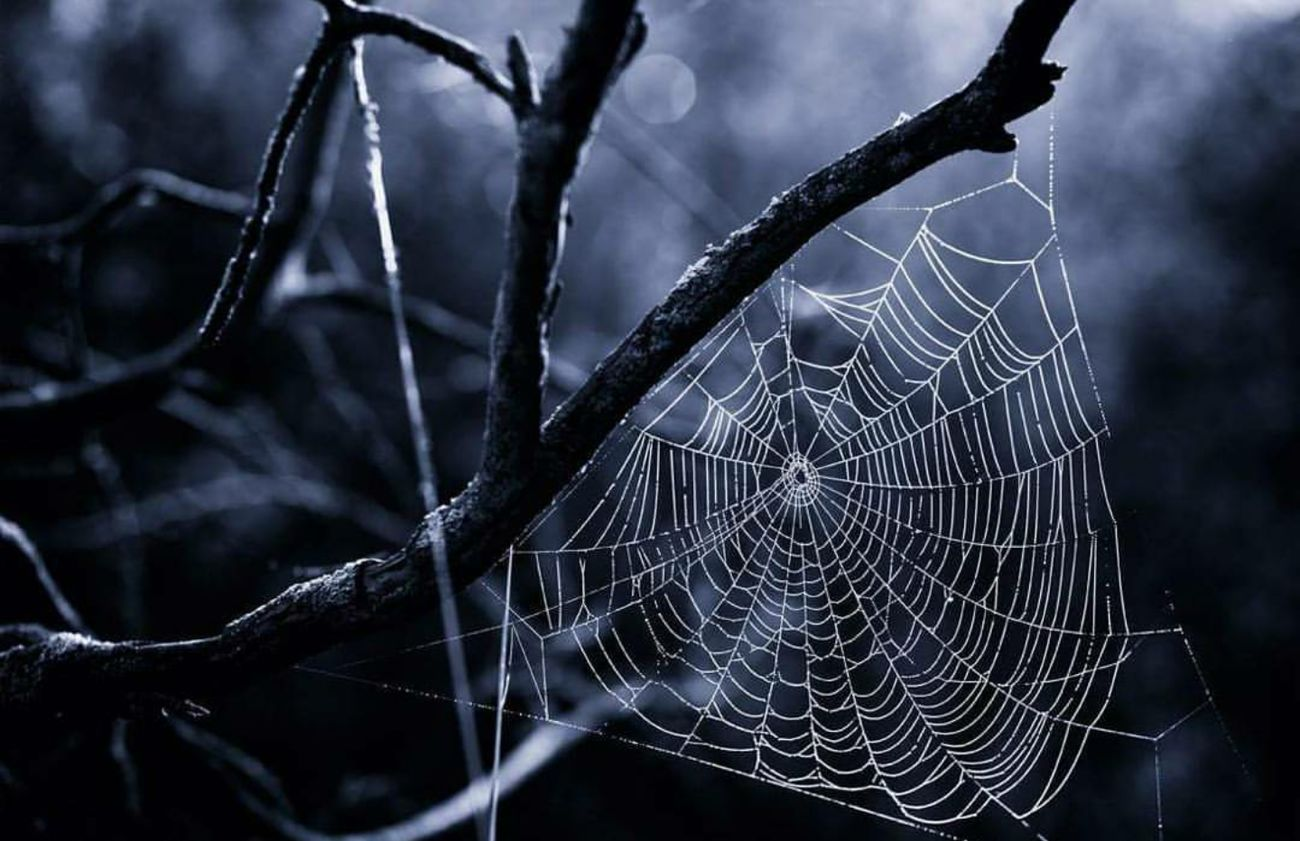 Masterpiece of a Spider Part IV 🎗🕸🎗 Spiderweb Spiderworld Focus On Foreground Selective Focus Prison Close-up Fragility Nature Cage Outdoors Monochrome Photography Spooky Monochrome Look Like It's Magic Creative Light And Shadow Atmospheric Mood Light Up Your Life Simple Quiet Love Exceptional Photographs From My Point Of View Minimalism EyeEm Nature Lover Beauty In Nature Animal Wildlife Nature