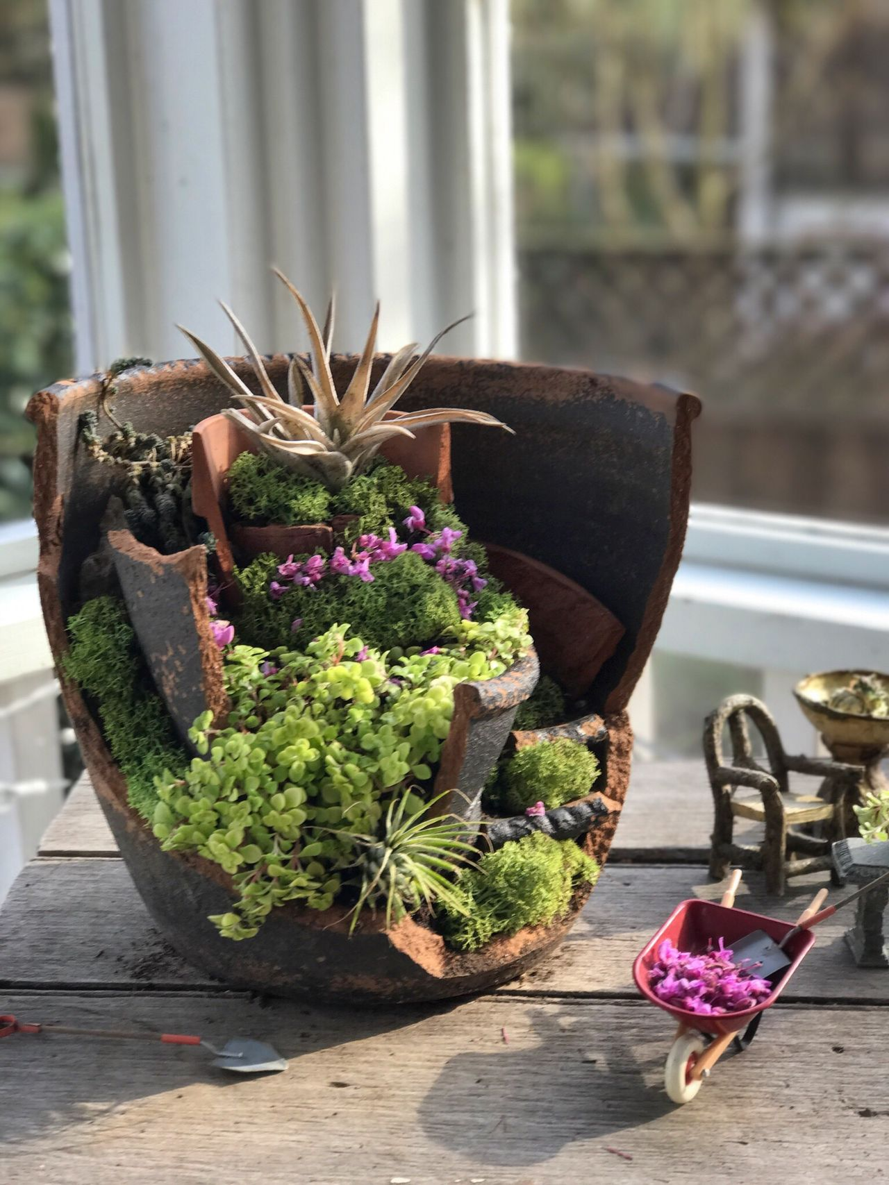 Hope springs eternal. Fairy Garden Fairy House Flower Freshness No People Plant Nature Fragility Day Beauty In Nature Close-up Springtime Flower Pot Repurposed