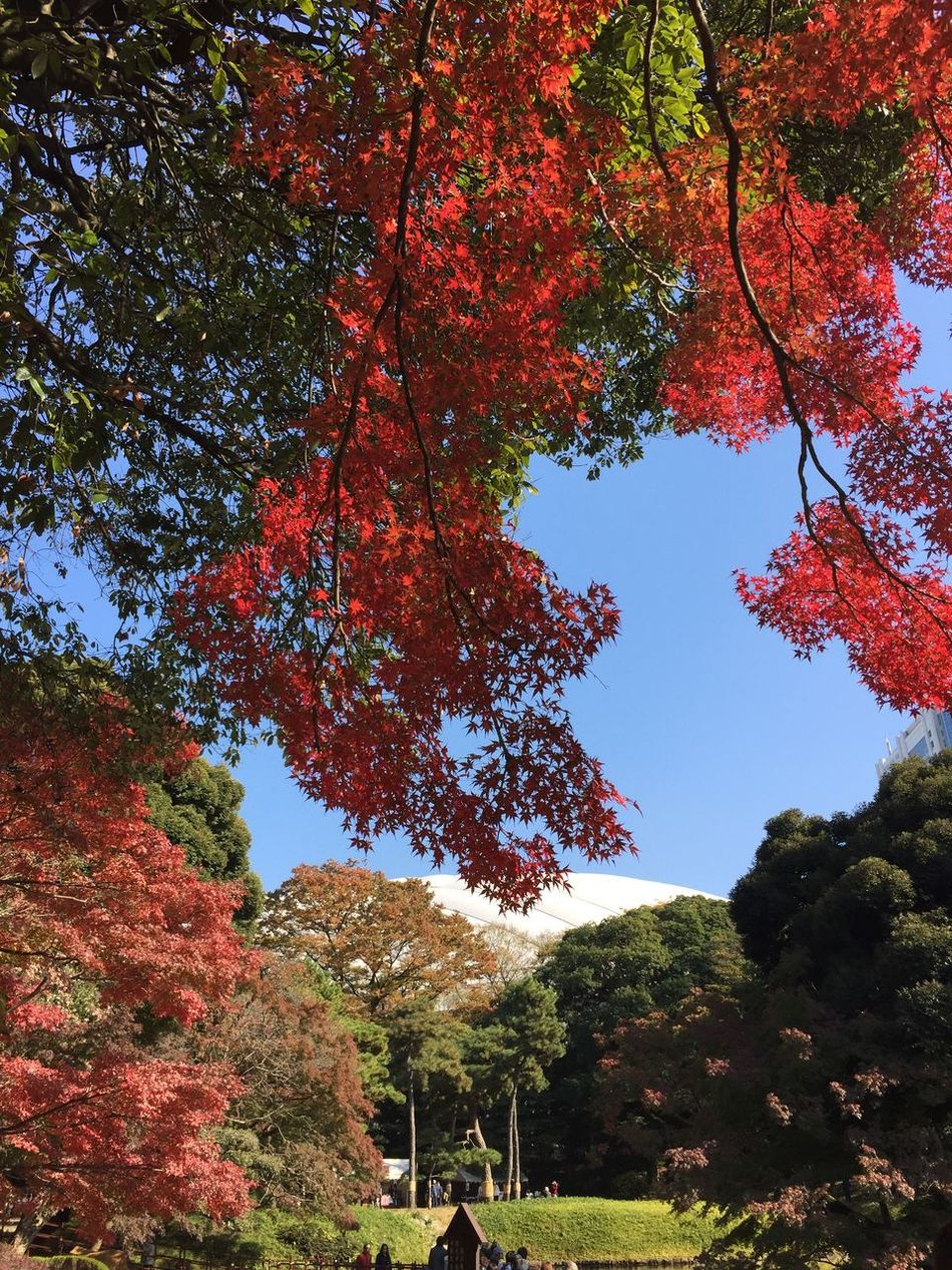 Japan Autumn Colors Taking Photos