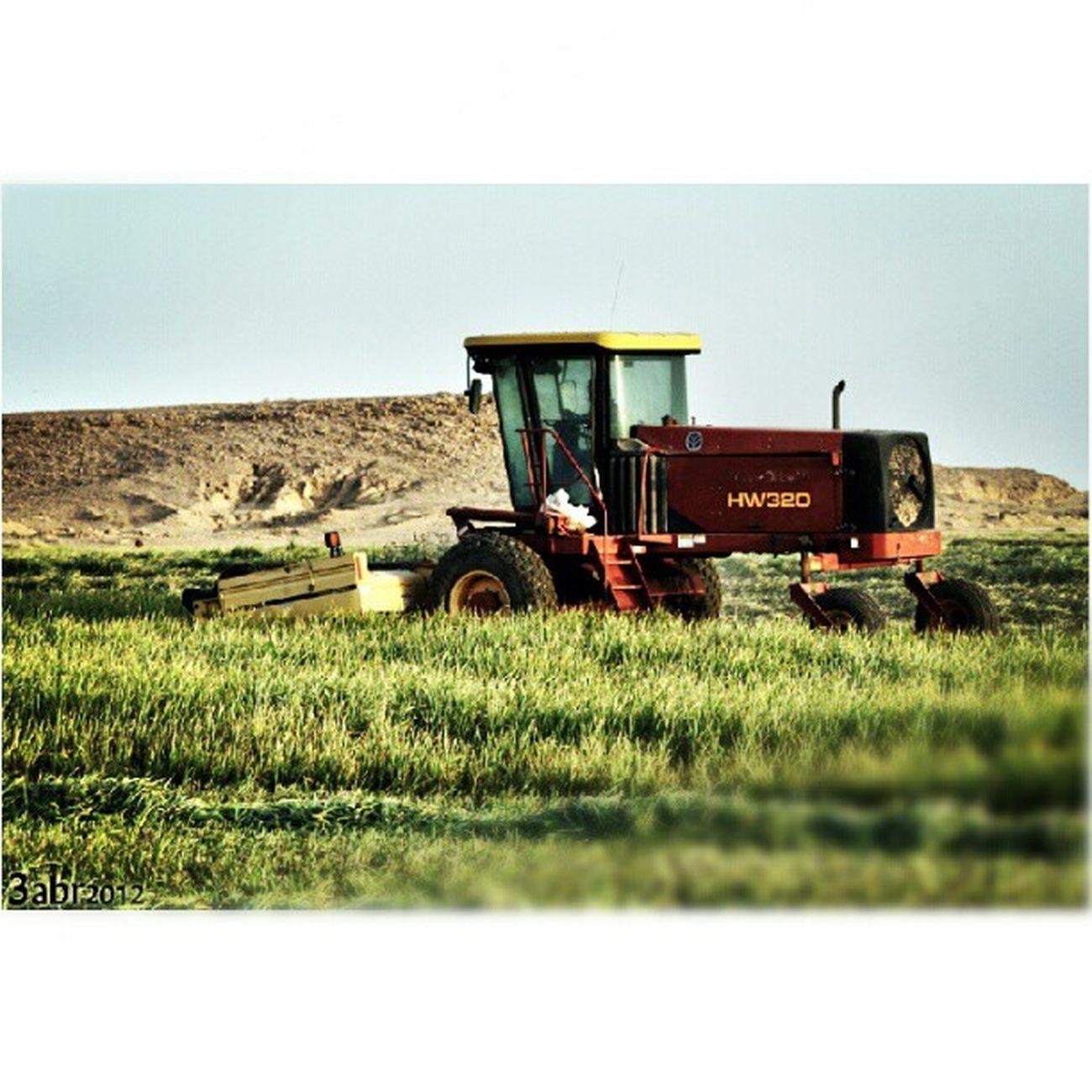 صورة حصادة الزرع مزرعة السلمان بجوار الربيعية في القصيم كاميرة كانون عدسة زوم Combine image transplant Salman farm next spring in Qassim Camcorder Canon zoom lens, 2012 x3abrr Instagram flickr twittr facebook