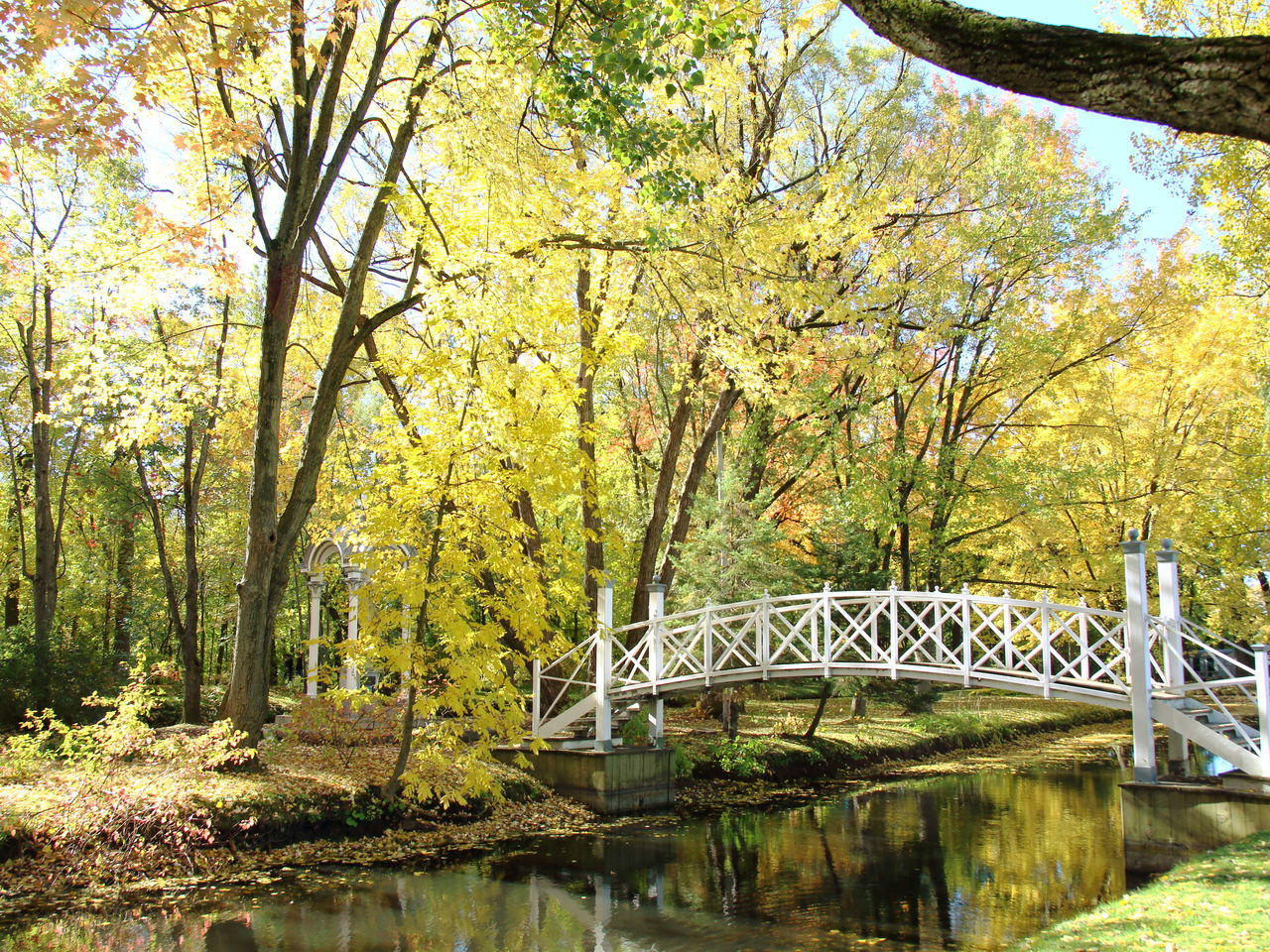 bridge - man made structure, connection, tree, autumn, river, built structure, architecture, nature, leaf, water, day, outdoors, no people, growth, transportation, forest, footbridge, beauty in nature