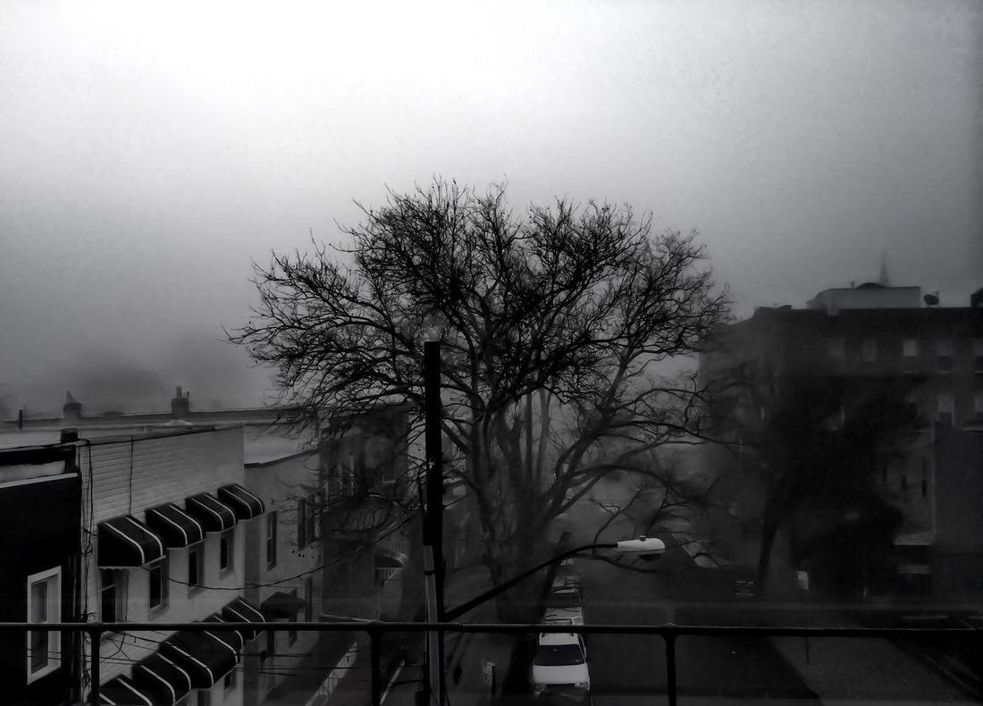 Beauty In Nature Cloud - Sky New York Outdoors Overcast Queens Ridgewood Tree Winter