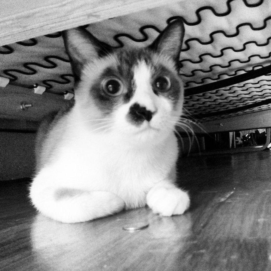Hari hujan, Hikothecat duduk bawah sofa, takut kilat ⚡⚡