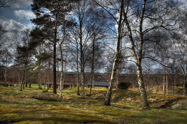 A Stroll In The Park Beautiful Day Beautiful Nature Birches Day Outdoors Park Sunny Day Trees White Birch