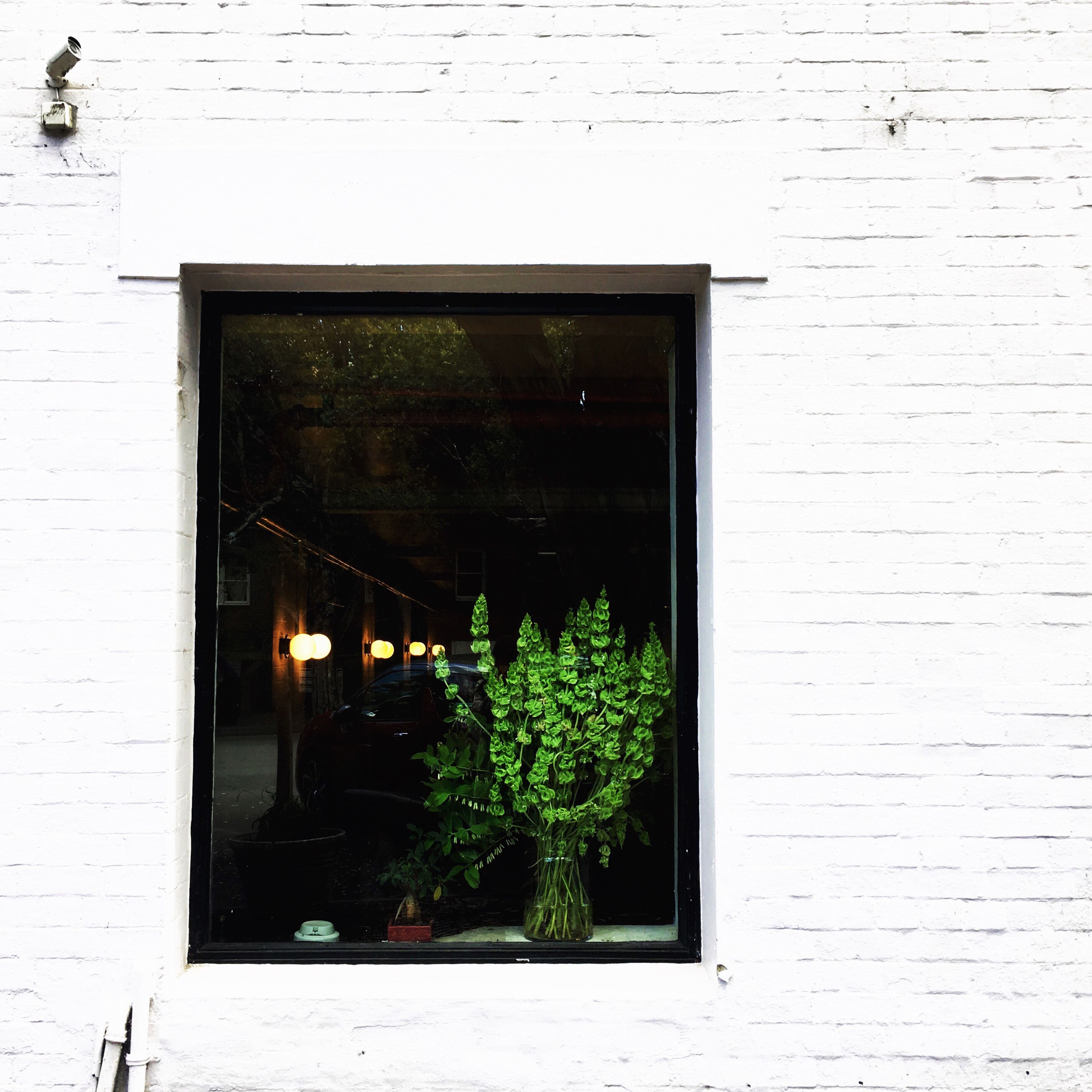 plant, window, building exterior, architecture, built structure, no people, day, outdoors, nature