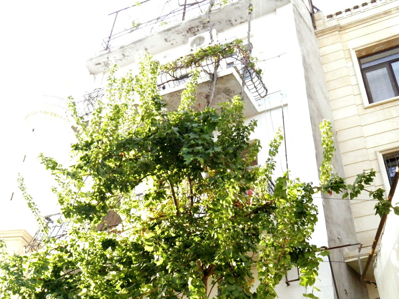 Architecture City Tree Outdoors Plant Nature Greenhouse Fragility Skyscraper Built Structure Growth Day Branch Building Exterior No People Sky First Eyeem Photo Low Angle View