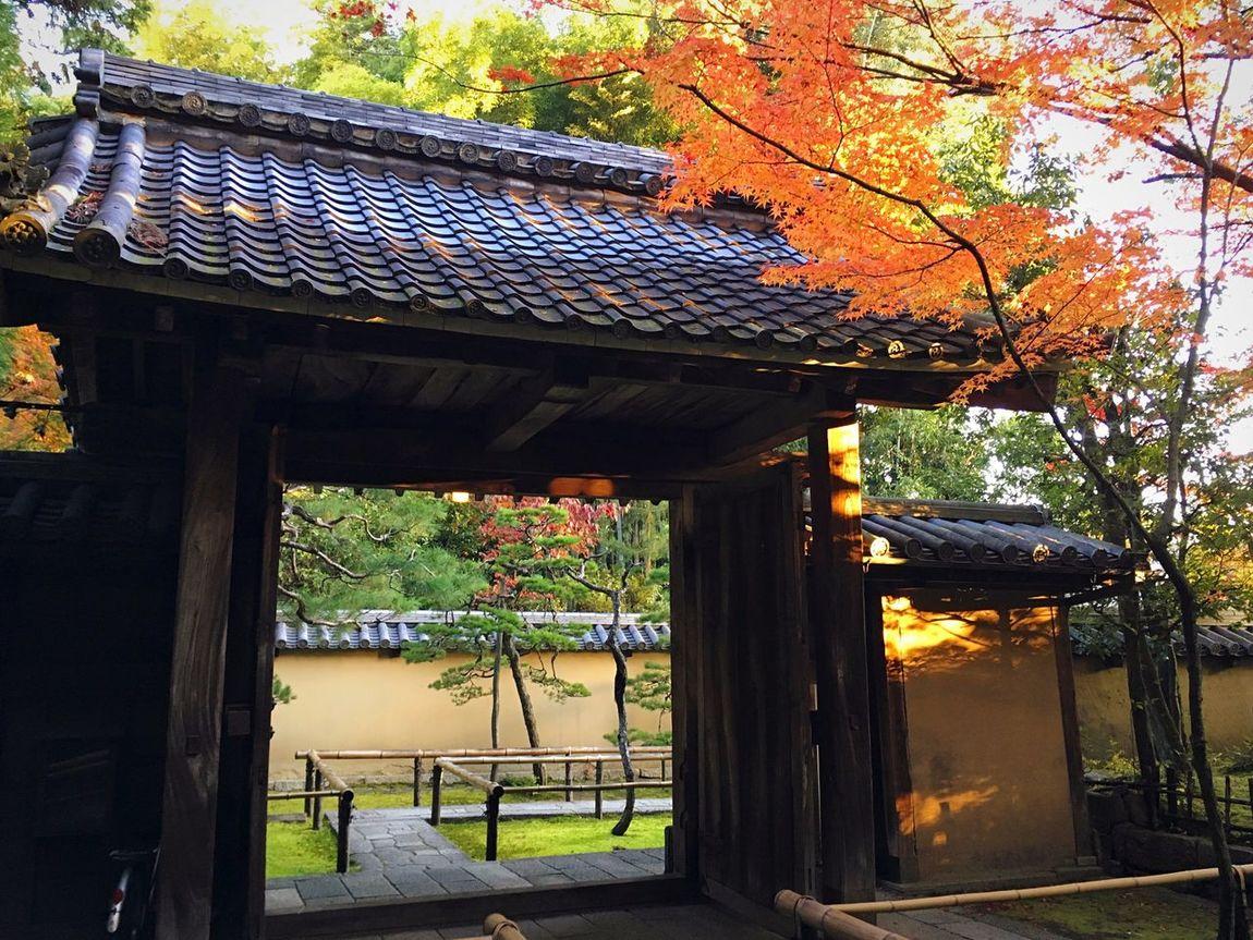 高桐院 大徳寺塔頭 京都 Kyoto Autumn Kyoto, Japan Autumn Leaves Autumn Colors Kyoto Autumn Kyototrip Travel Destinations Hello World Relaxing Enjoying Life