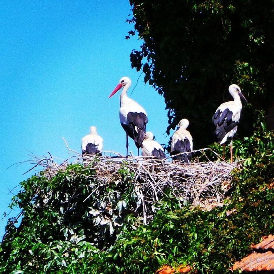 Cigüeñas Naturaleza Anloglove Pasqualecaprile España elboalo