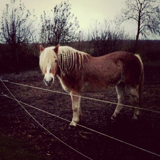 Lovely Horse Pets Forever! In Love With Him ♥