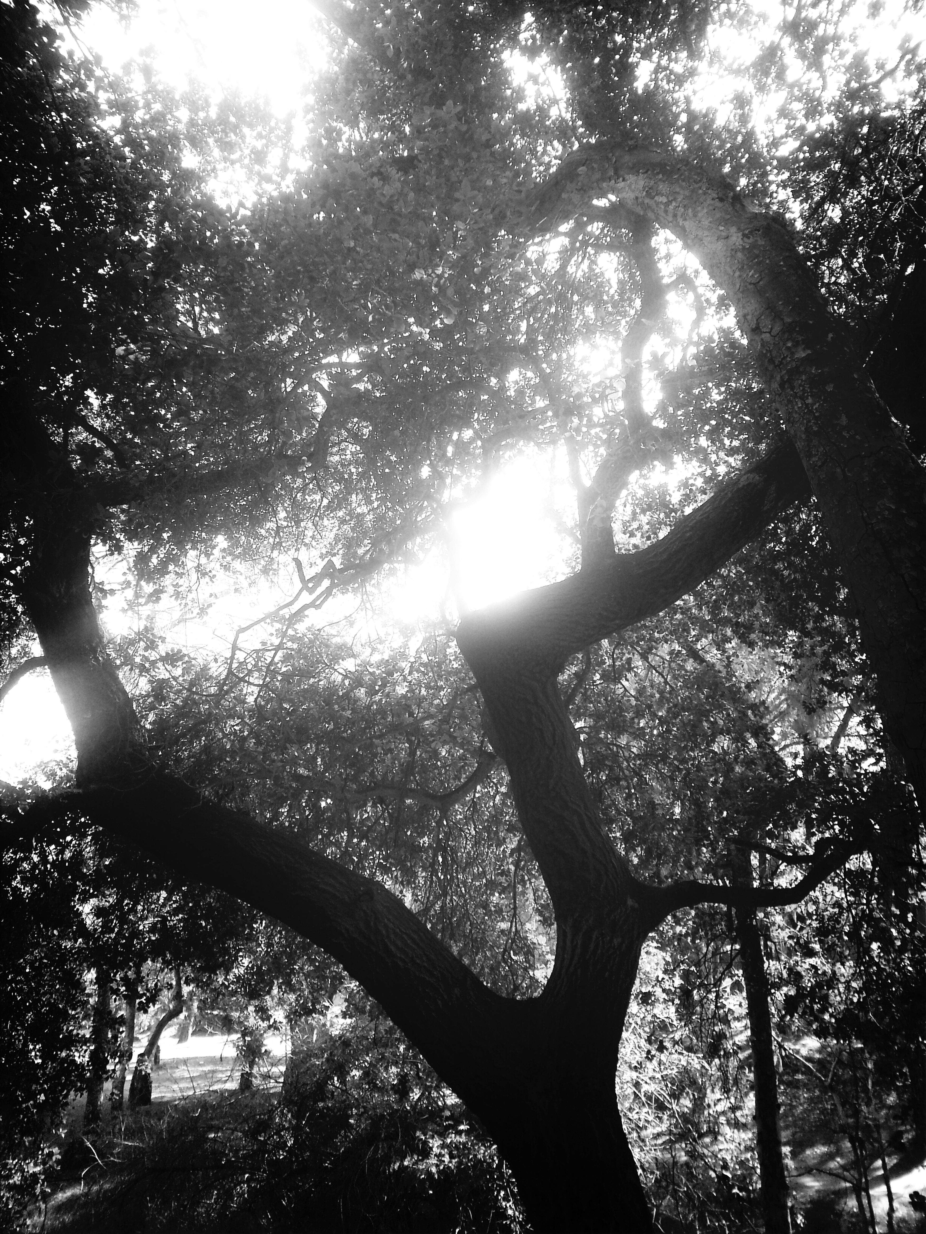 City Of Lost Angels has many Trends So peacefully Haunting  Bonifiedin its Swagger Boldy Rooted while in Drought ▲♧☆▲Fearless in it's Treeline ◆Melancholy In Its Nature