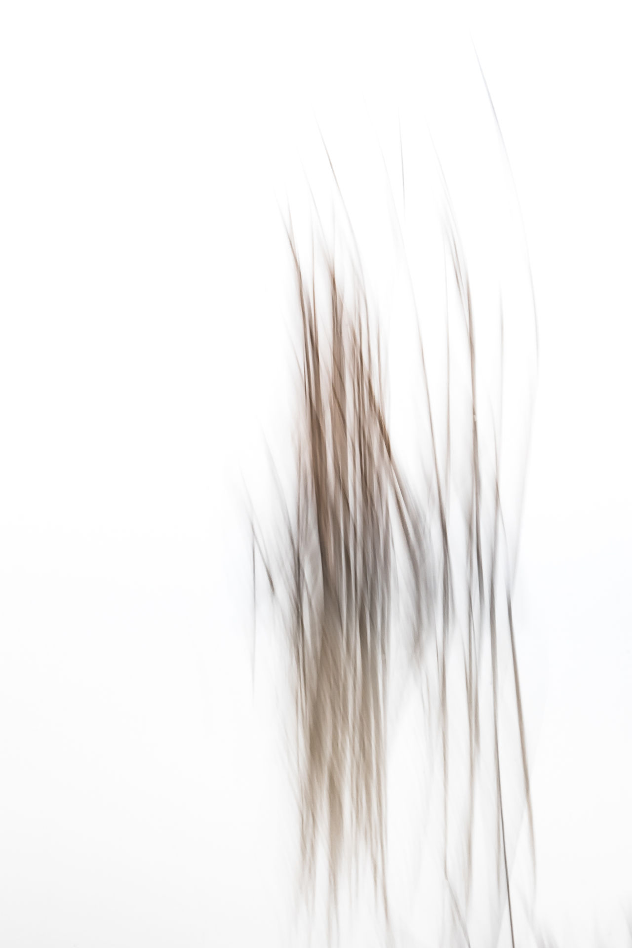 Abstract Abstract Photography Beauty Blurred Movement Close-up Experimental Experimental Photography Grey Color Lake Blurred Mirroring In Water Motion Reed White Background