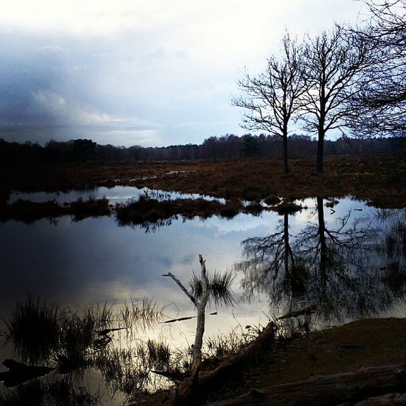 Beautiful Scenery Walkway Trail Tree Reflections Light Sky Netherlands Vursche Today Nature Oneofmyfavouritewalks