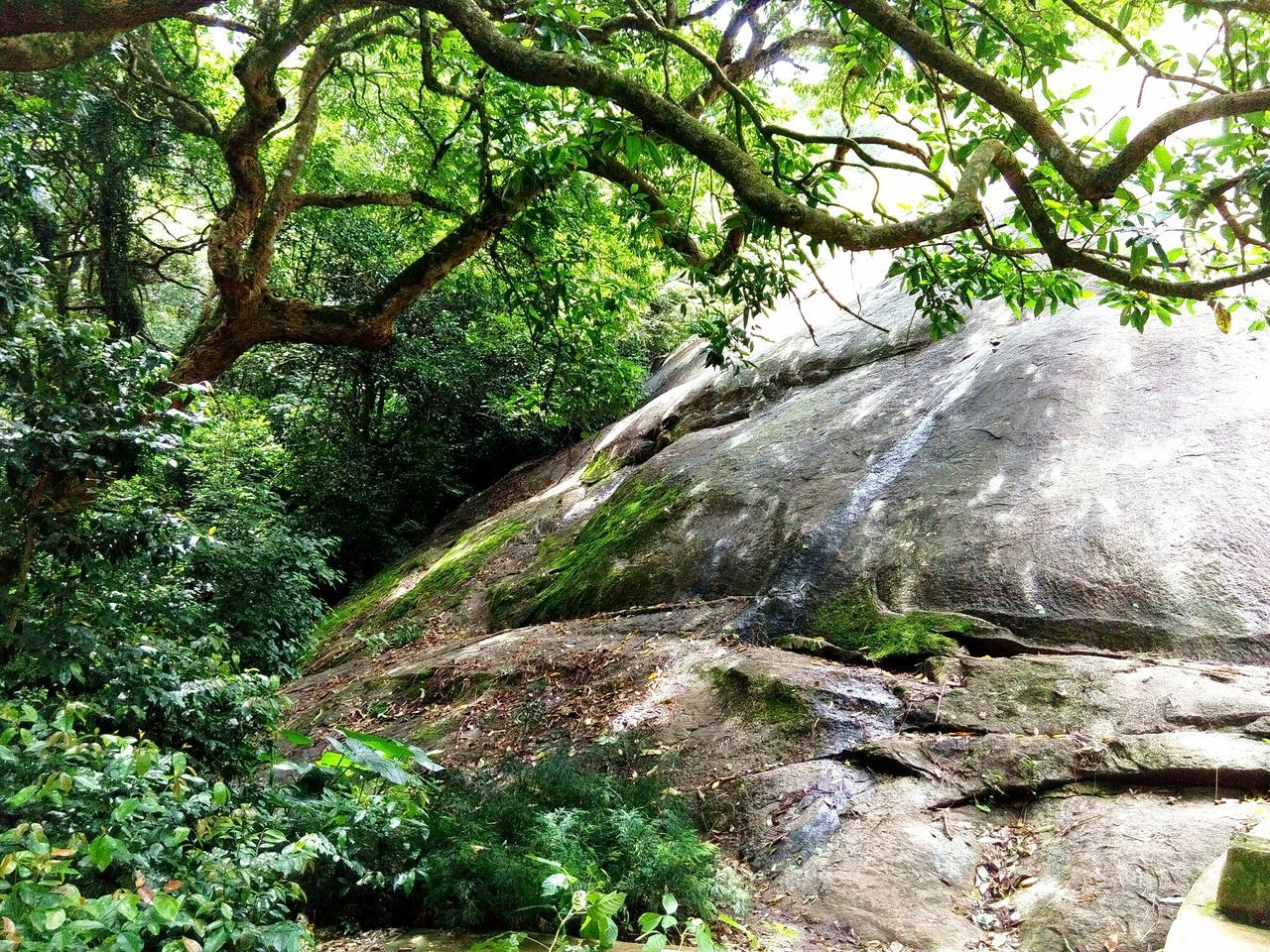 Rock Waterflow Tree_collection  Nature_collection Nature Photography