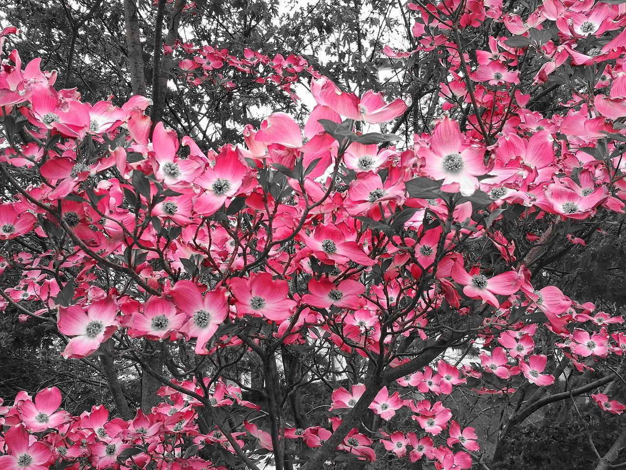 Backgrounds Pink Color Day No People Petal Fragility Plant Growth Nature