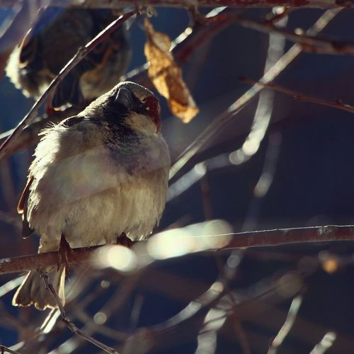 Bokeh Bokehlicious Bokeh Lights Light And Shadow Bird EyeEm Best Shots Popular Branches