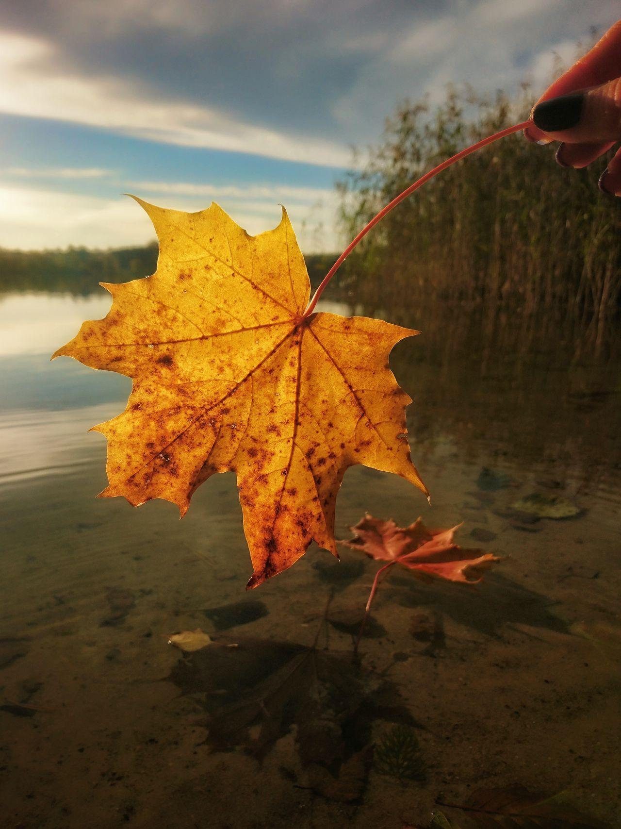 Autumn Change Leaf Season  Scenics Orange Color Beauty In Nature Majestic Nature Outdoors Non-urban Scene Natural Condition Vibrant Color Day Poland Warmia Jesień