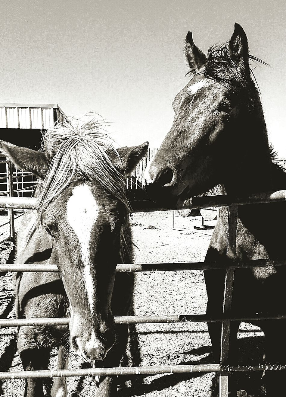 Ranch horses Domestic Animals Animal Themes Horse Mammal Sunlight Herbivorous Livestock Working Animal Sky Outdoors No People Close-up Stable Paddock Day Hoofed Mammal Country Life Portrait Lifestyle Cowboy Farm Ranch Barn Ranch Life Country Living
