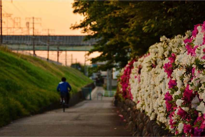また あしたぁ〜😁 TheWeekOnEyeEM Taking Photos EyeEm Best Shots Nikon Streetphotography Eye4photography  EyeEm Nature Lover Naturelovers Sunset Flower