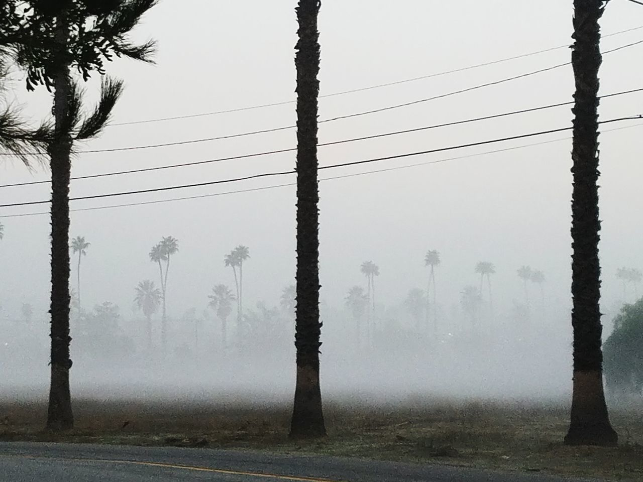 Tree Fog Foggy Morning No People Outdoors Beauty In Nature Early Morning Walk To Work Palm Tree