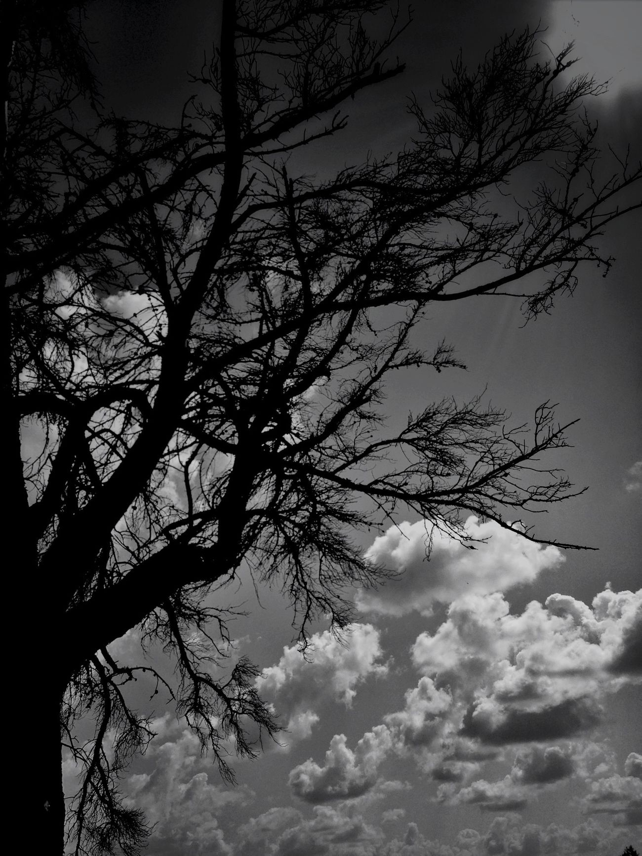 Cloudporn TreePorn EyeEm Nature Lover Blackandwhite