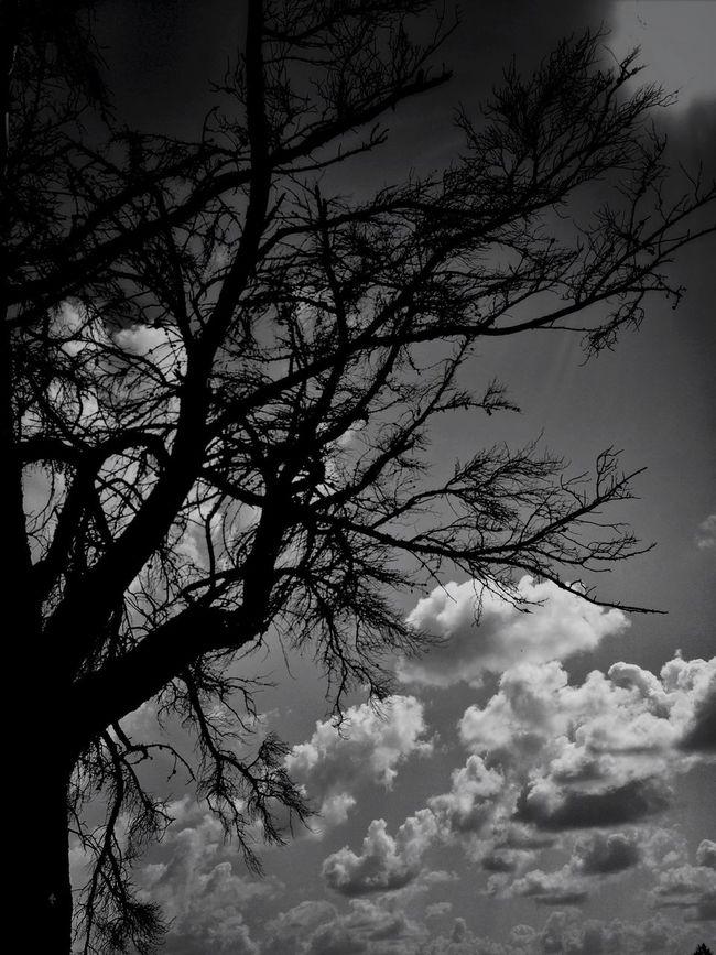 Cloudporn TreePorn EyeEm Nature Lover Blackandwhite