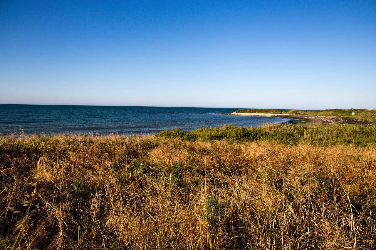 mediterranean vevegation Beach Blue Clear Sky Day Grass Green Color Growth Horizon Over Water Marram Grass Mediterranean  Mediterranean Landscape Mediterranean Sea Mediterranean Vegetation Nature No People Outdoors Scenics Sea Sky Tranquil Scene Water