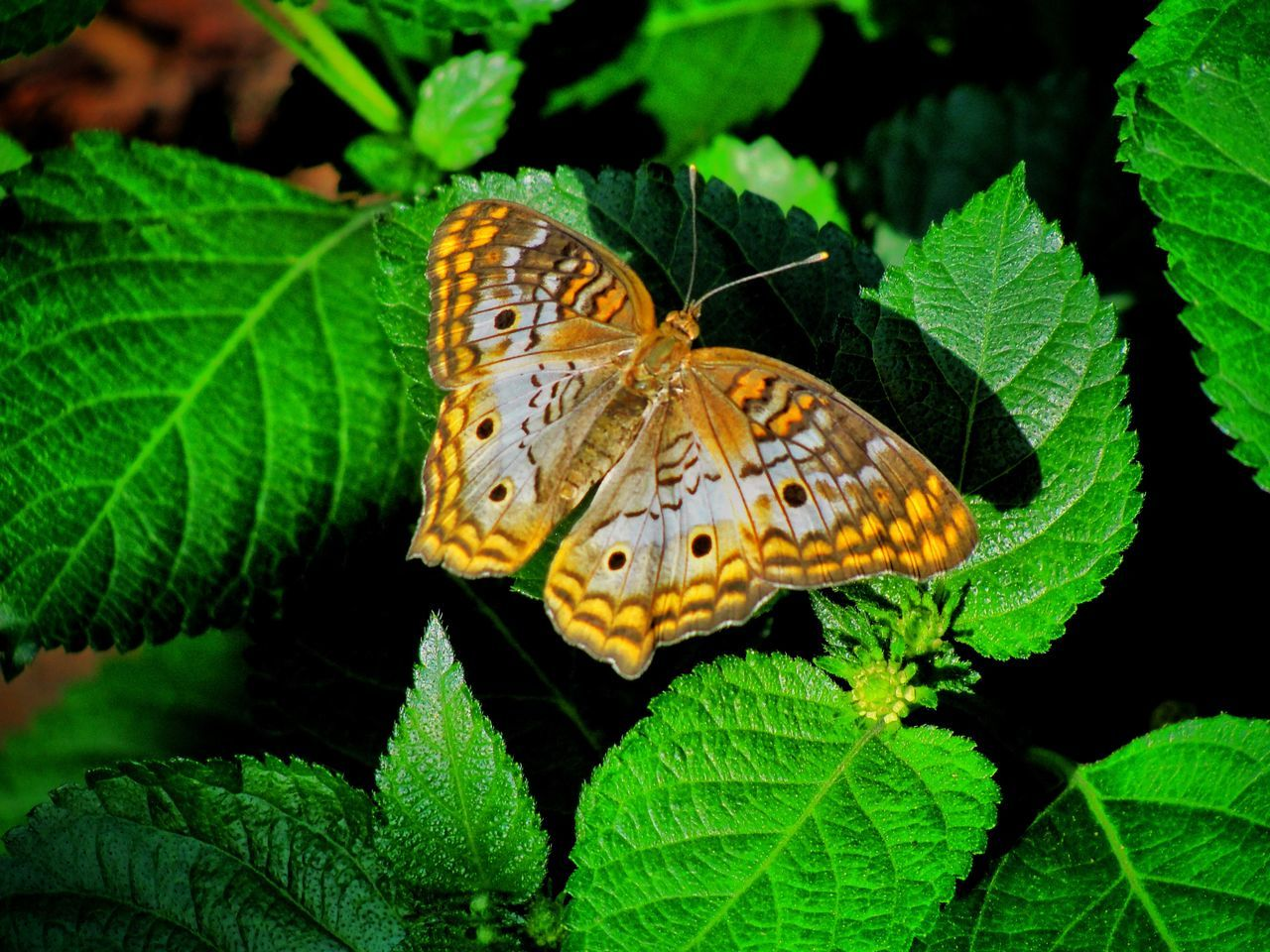 Close-Up Of Butterfly Perching On Green Leaves