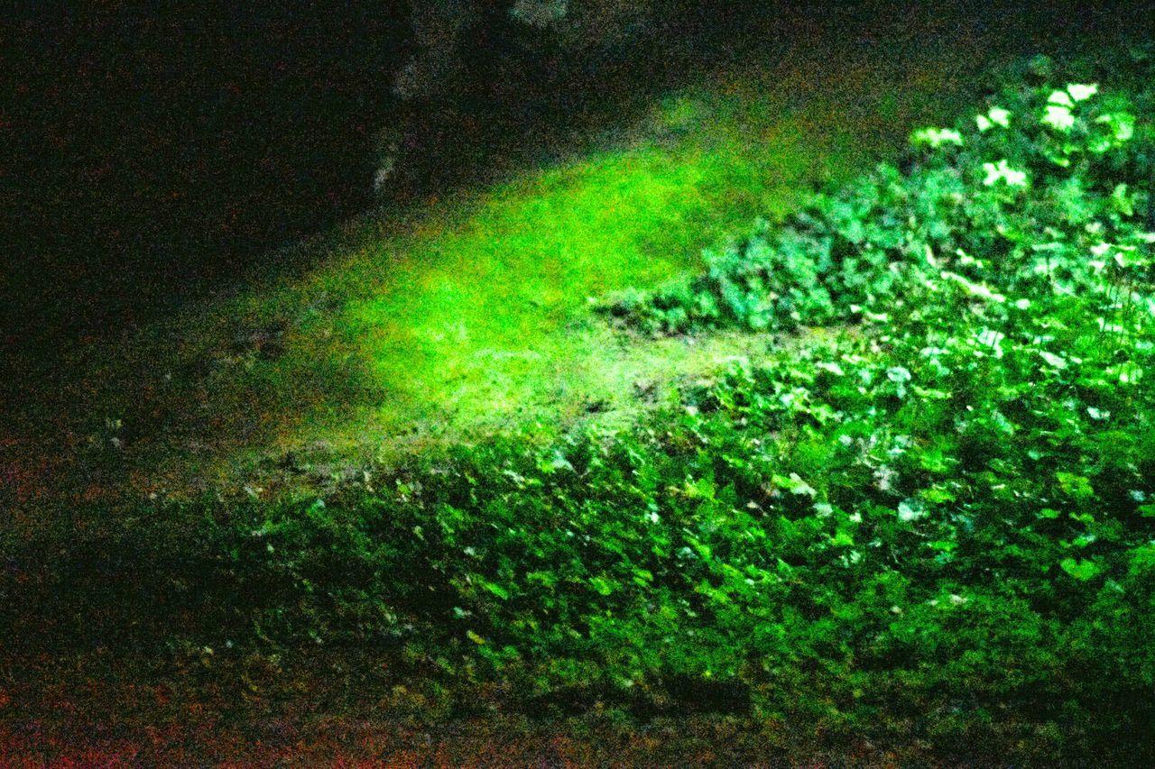 洞窟の中でも逞しい緑 Green Color No People Close-up Backgrounds Outdoors Beauty In Nature Nature Day