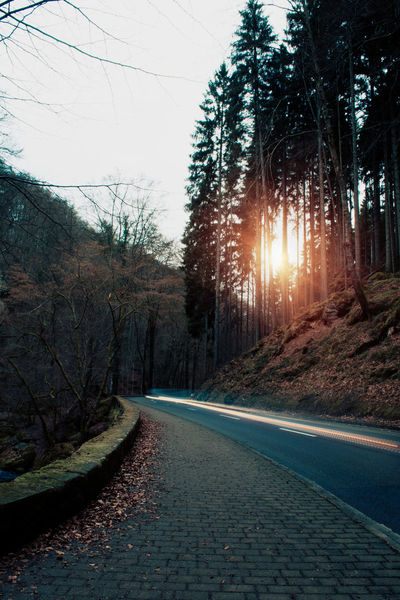 Beauty In Nature Car Light Trails Day Focus On Foreground Lens Flare Long Exposure Long Exposure Shot Müllerthal Nature Nature No People Outdoors Road Road Scenics Sky Sun Sunbeam Sunlight Sunset Sunshine The Way Forward Tree Winding Road