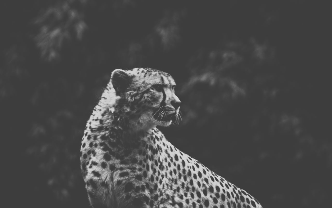 one animal, animal themes, animals in the wild, mammal, focus on foreground, day, animal wildlife, nature, outdoors, no people, close-up, sky