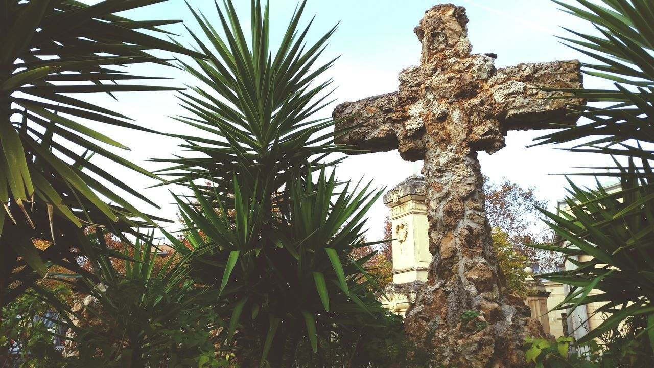 Low Angle View Sky Outdoors Plant Barcelona Cemetery Palmtrees Plants Day Cross Graveyard Beauty
