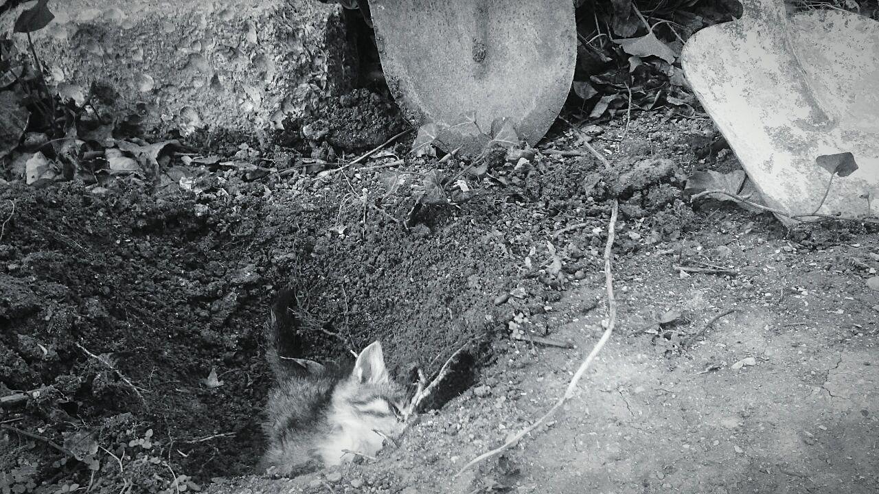 Havalar soyuyur. Qəlbimizdəki istilik də məhv olur, heyvanlar da. Animal Themes Dead Animal Cat Dead Cat First Eyeem Photo Enjoy The New Normal Home New New Life Baku Azerbaijan Friend Always Be Cozy
