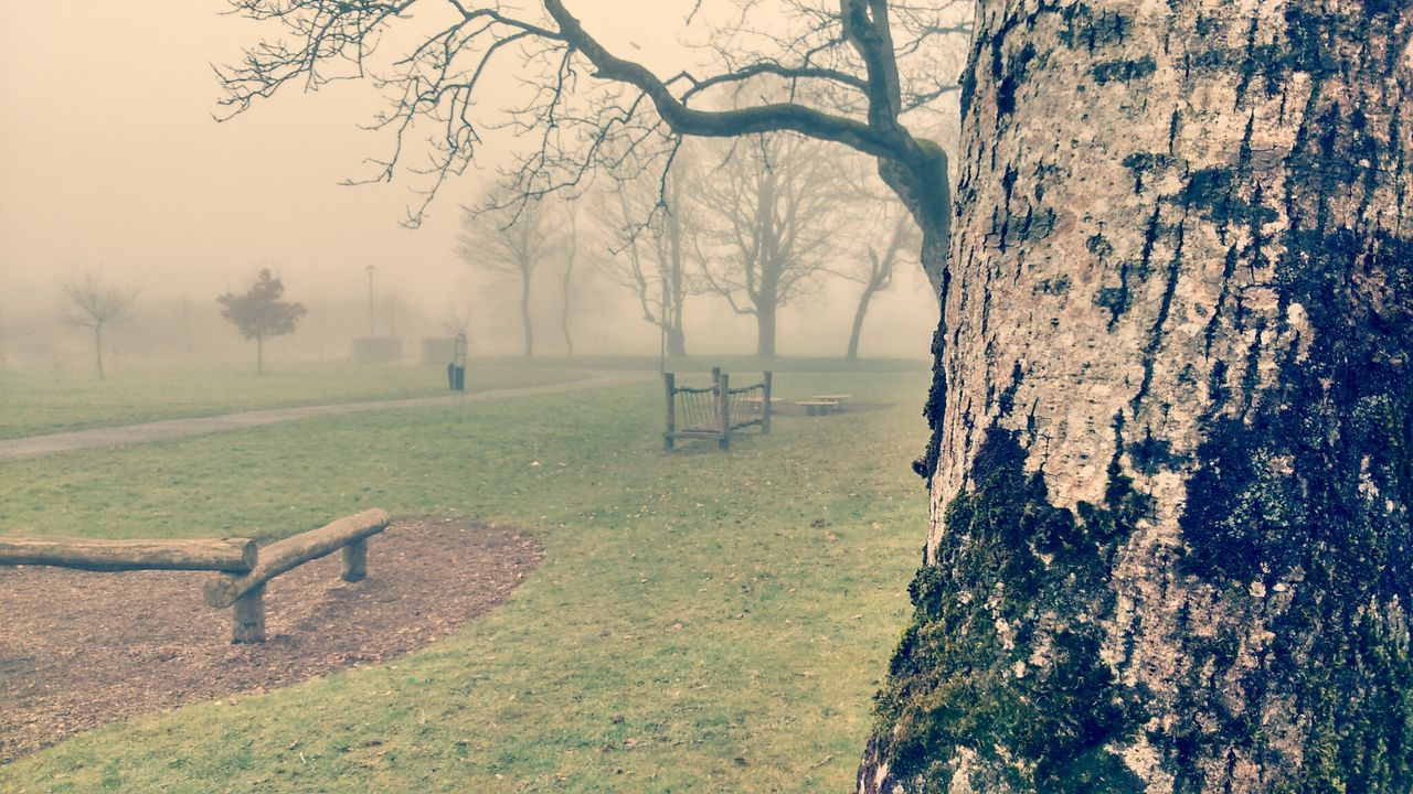 Trees In Park During Foggy Weather