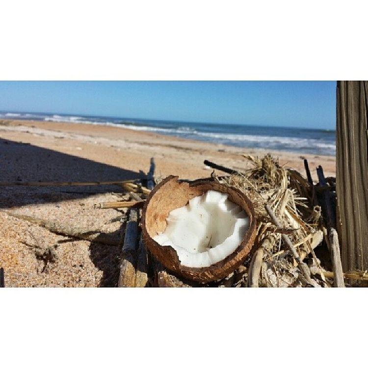 Coconut Beautiful Beachbum Amazingly perfectday