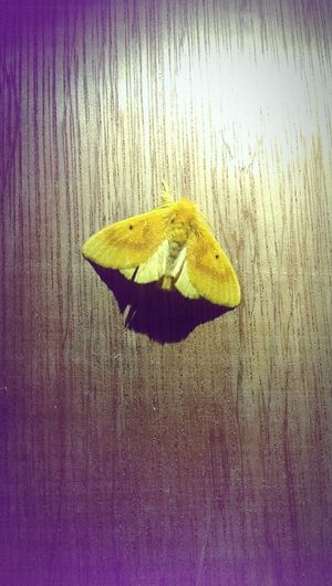 Nature Outdoors Close-up Moth Insect Beautiful