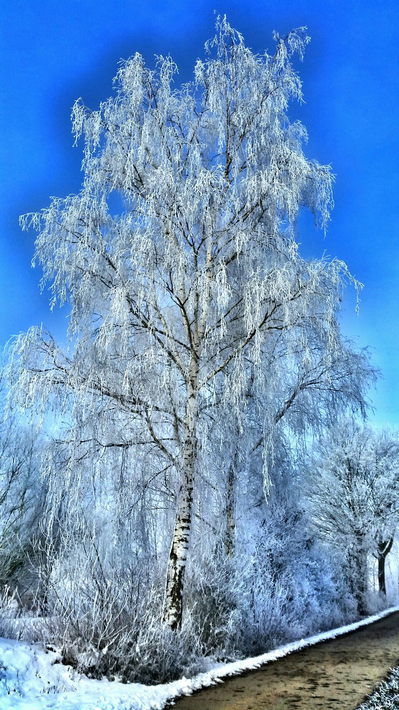 Cold in Germany Hdr_Collection Wintertime Winter Trees Cold Winter ❄⛄
