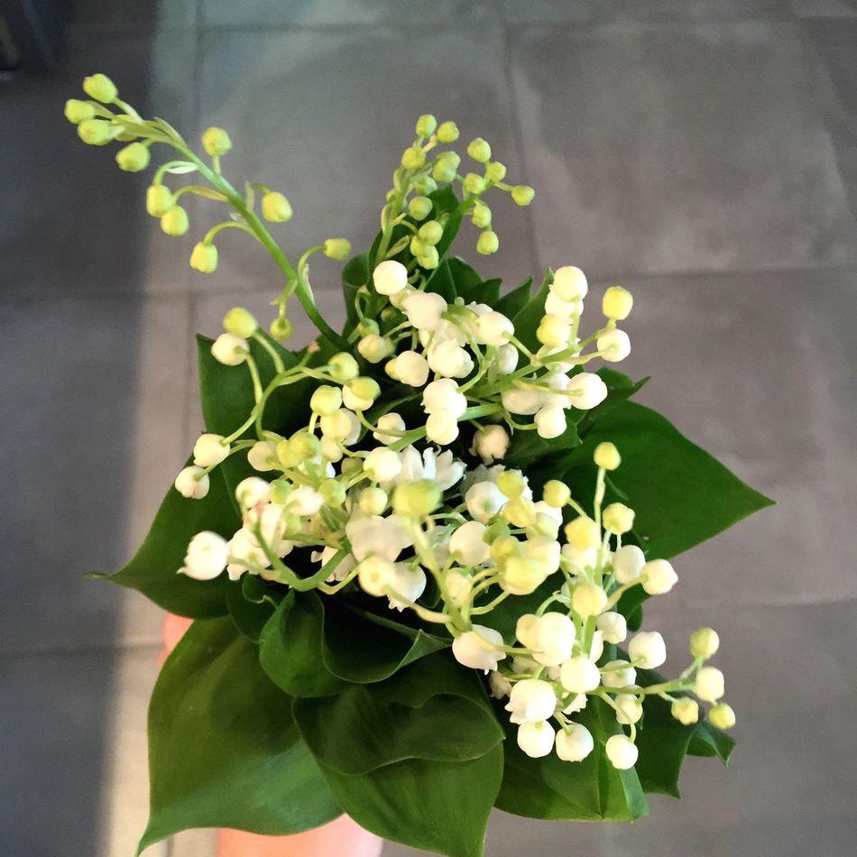 Flower Petal Blooming Flower Head Spring Flowers Lily Flower Lilies In Bloom White Flower Giglio Lirios