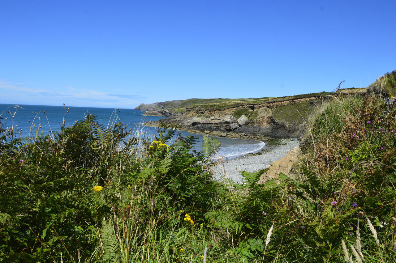 Beach Beauty In Nature Blue Day Grass Harbor Landscape Moor  Nature No People Outdoors Pembrokeshire Coast Scenics Sea Travel Destinations Tree Wales Water