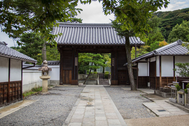 Architecture Asian Culture Blue Sky Buddhism Building Exterior Built Structure Conifer  Entrace Entrance Gate Gate Japan Pagoda Shinto Shinto Shrine Shinto Temple Shintoism Shrine Stone Lantern Temple Temple - Building The Way Forward Tradition Travel Destinations Trees