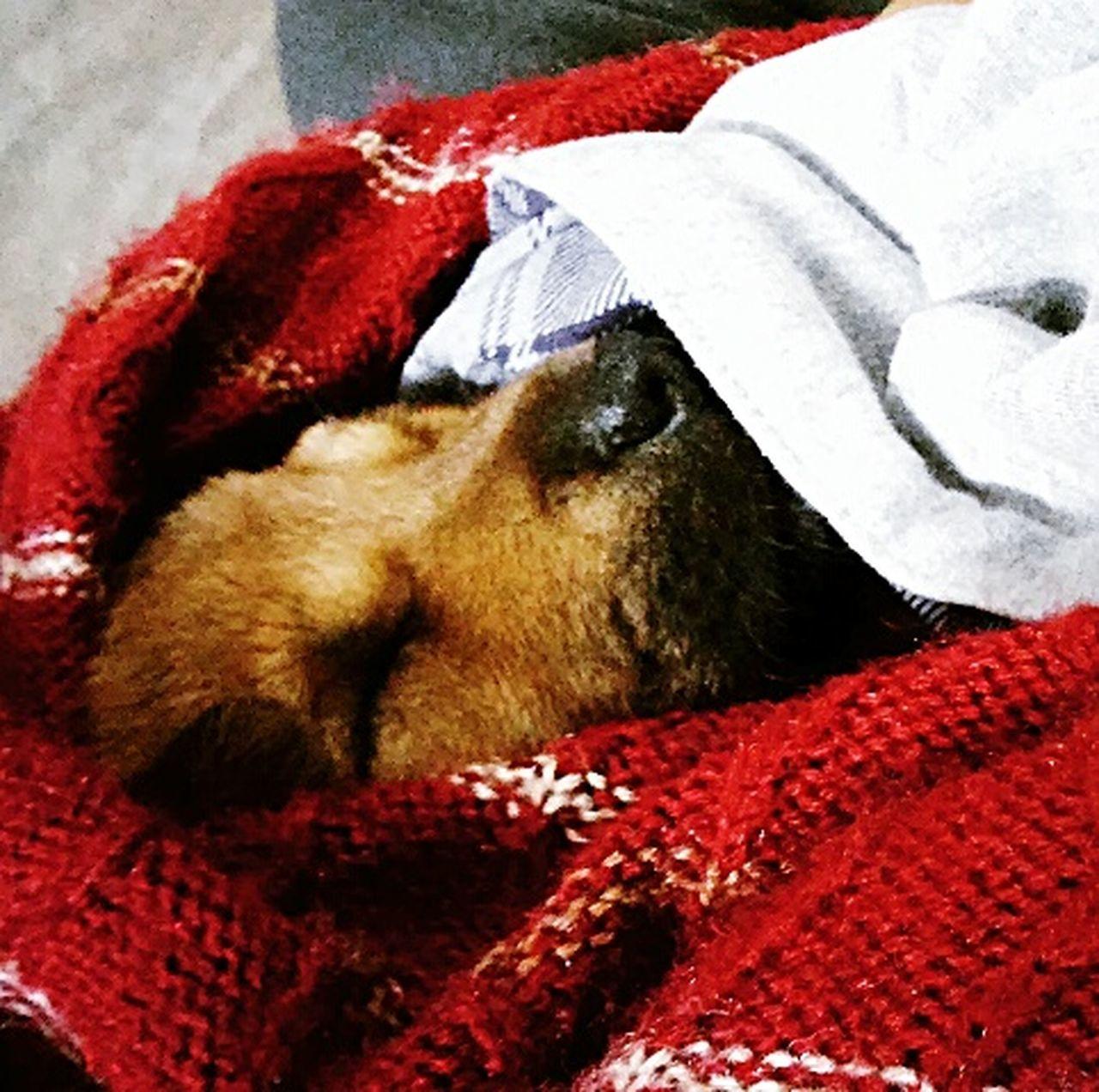 Always Be Cozy Puppy❤ Sleeping