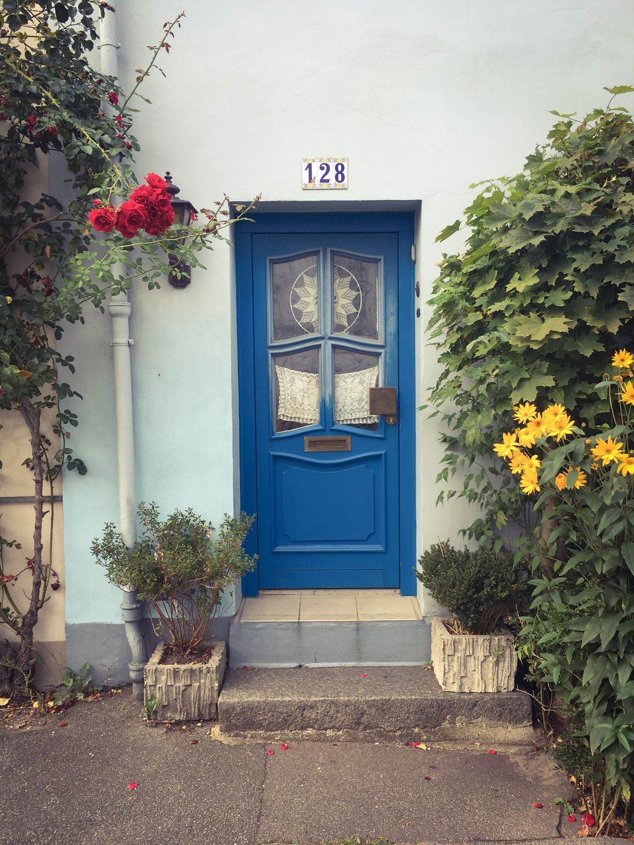 Blue Front Door Yellow Blossoms Red Roses Pastel Blue Light Blue Pastel House